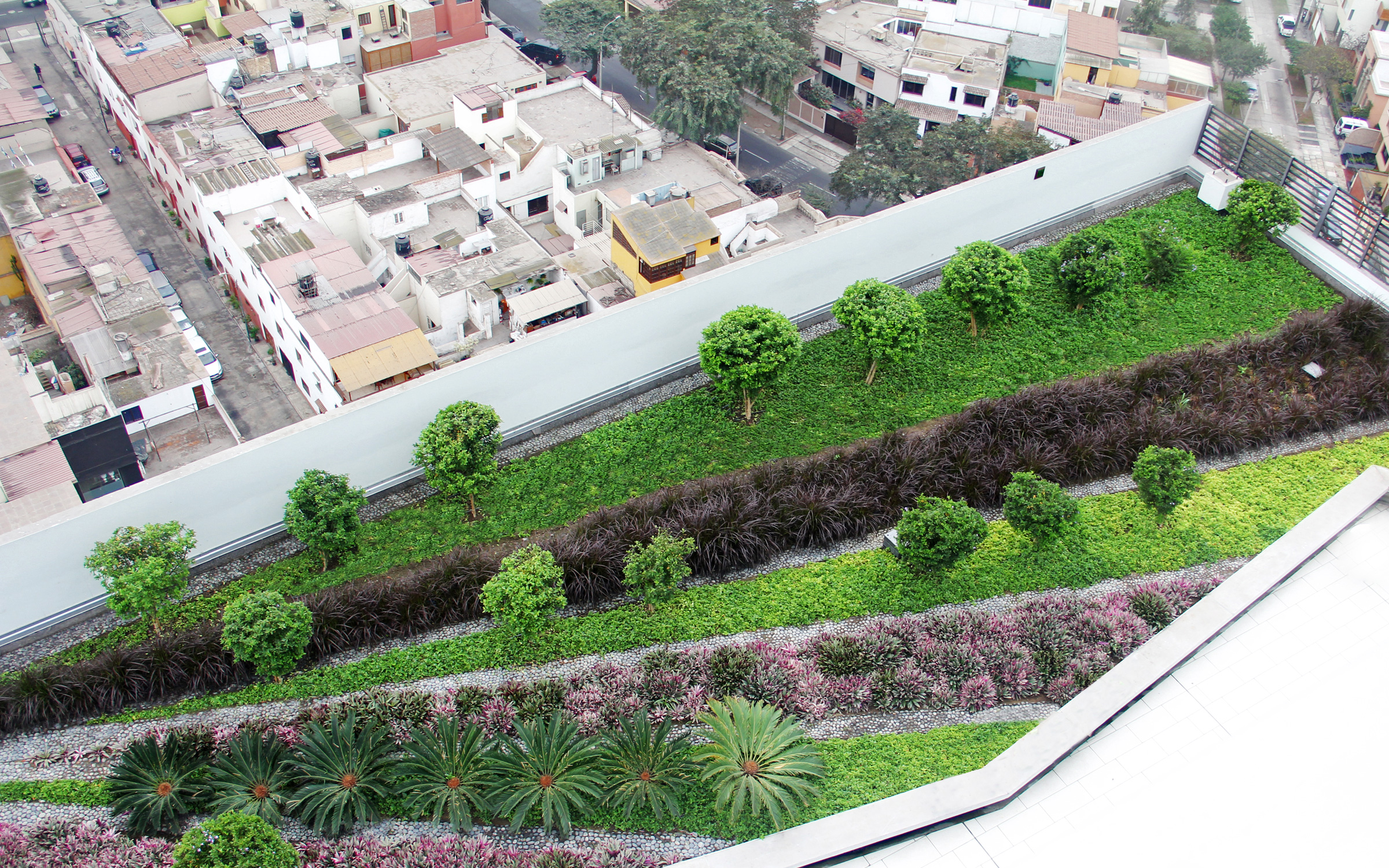 Roof garden with small trees, palm trees, shrubs and ornamental grasses