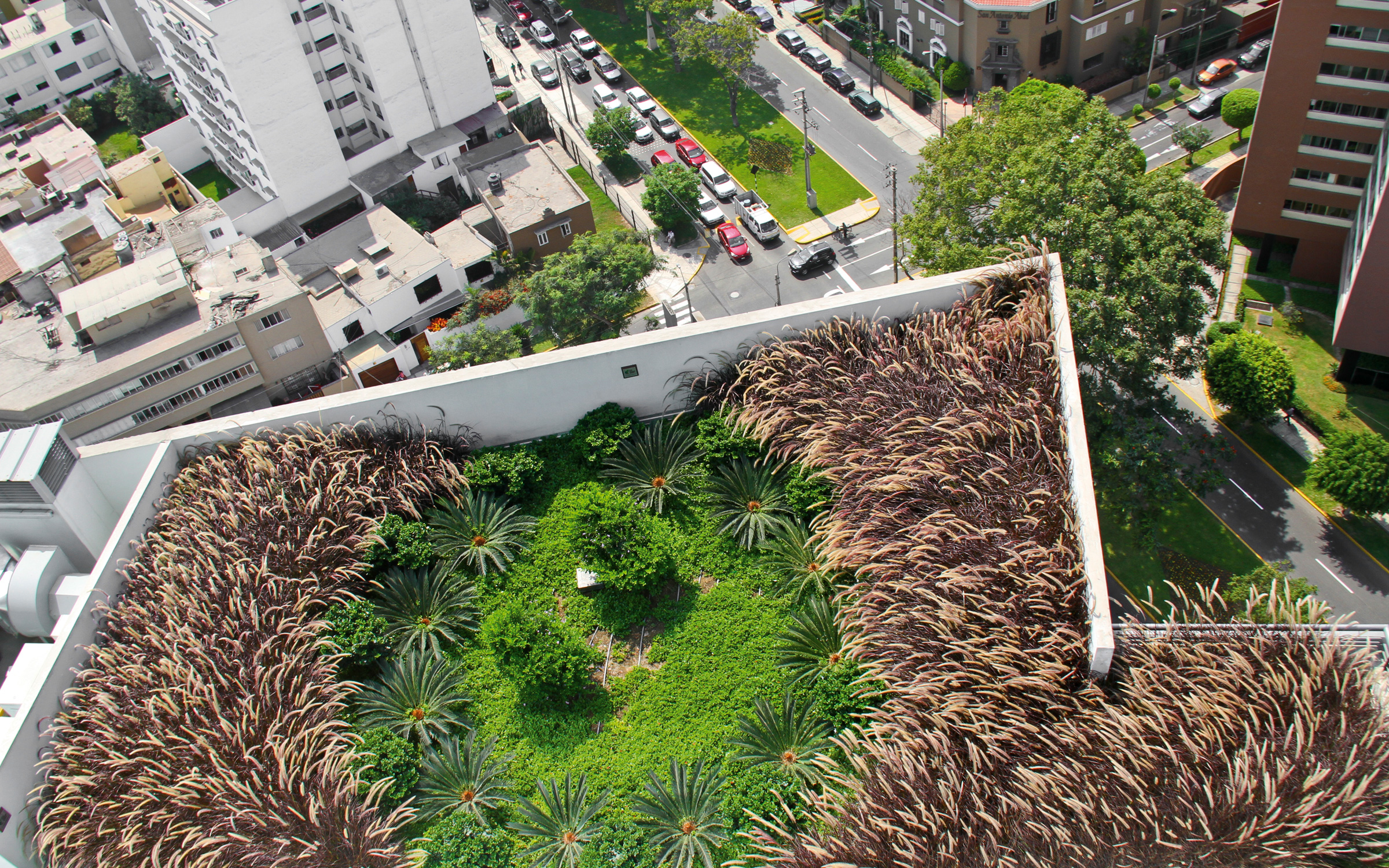 Bird's eye view of a roof garden with ornamental grasses and smal palm trees