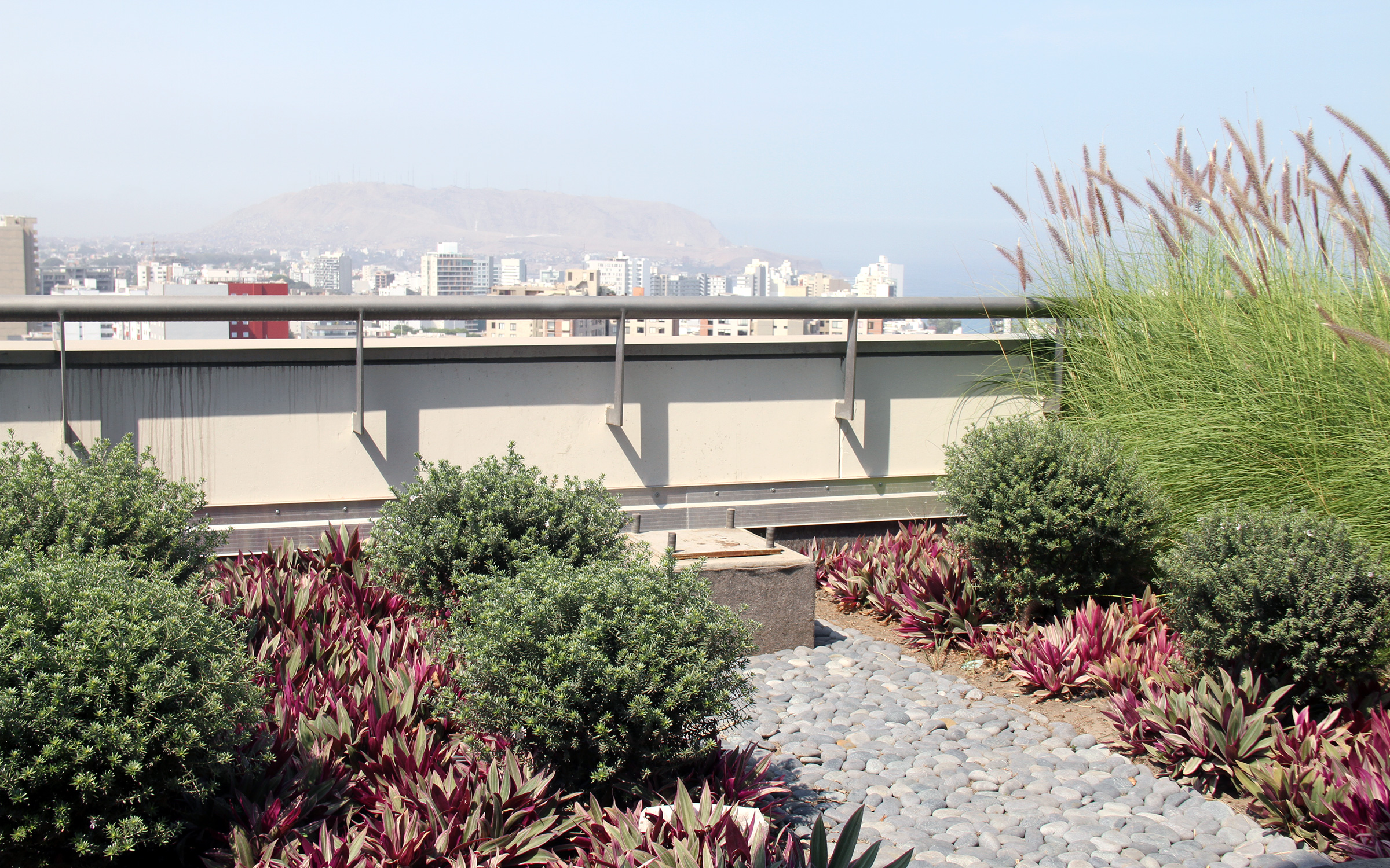 Roof garden with shrubs, ornamental grasses and small bushes in the city