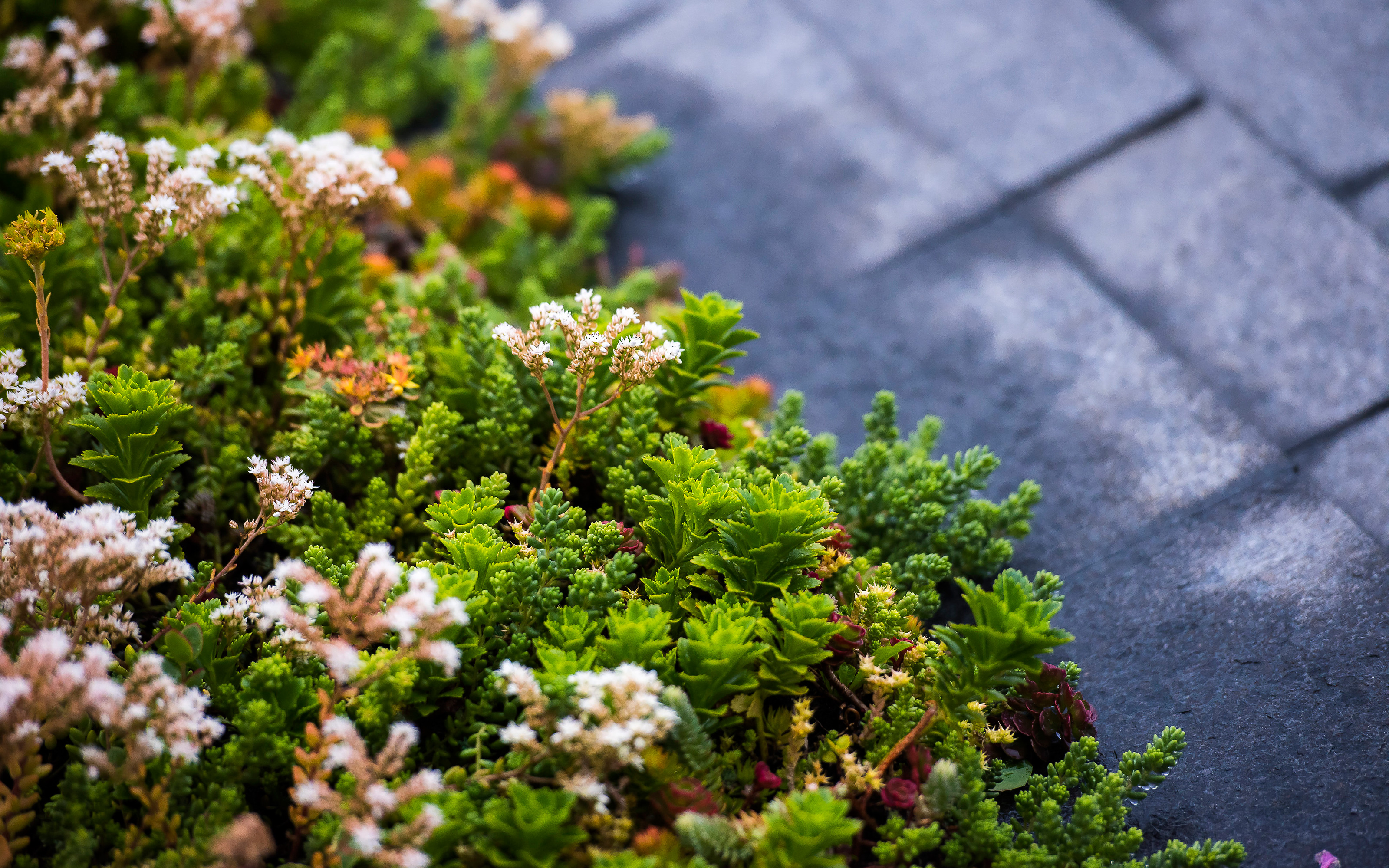 Villa Maris West Vancouver Zinco Green Roof Systems