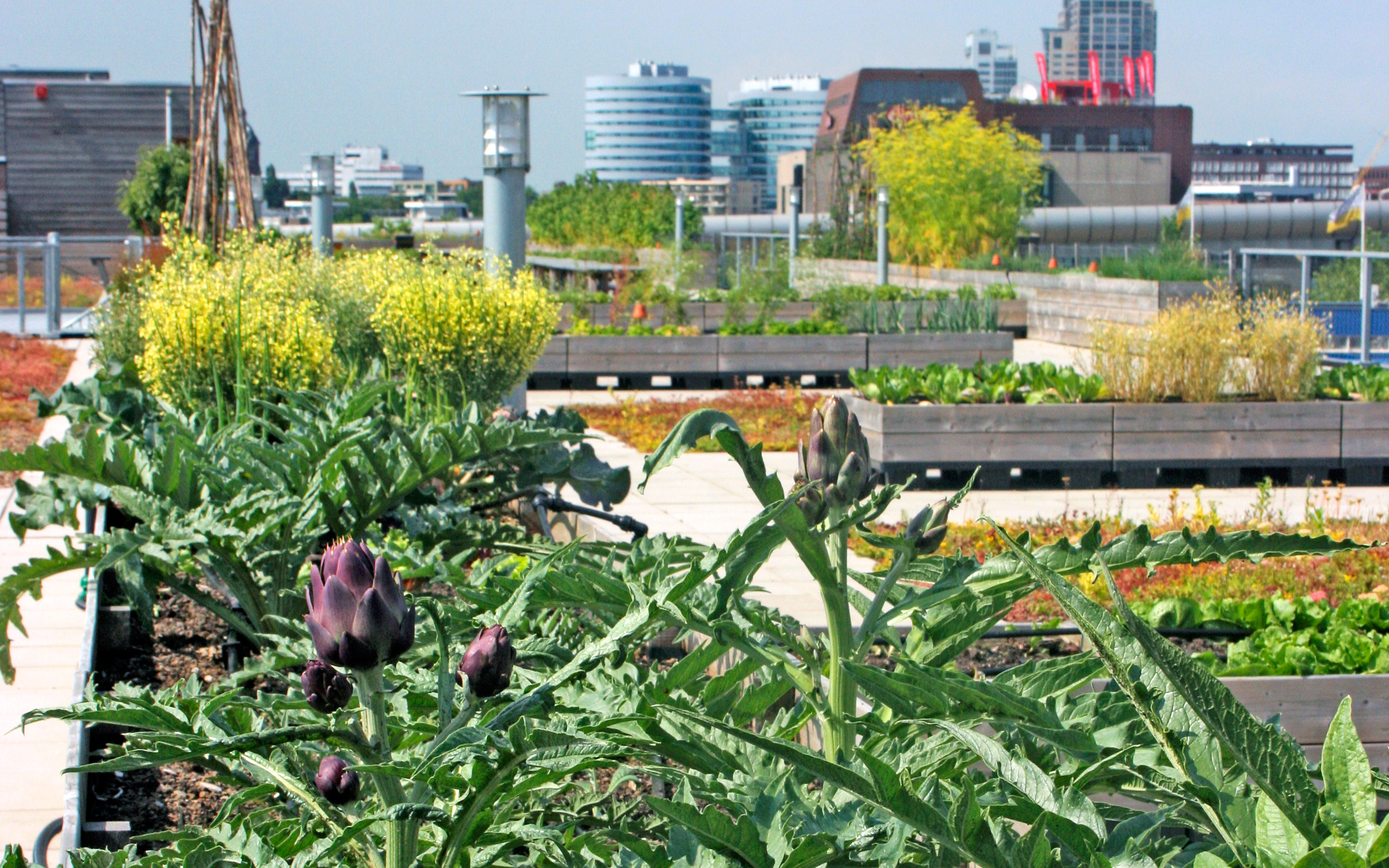Rooftop Farm In Zuidpark Amsterdam Zinco Green Roof Systems