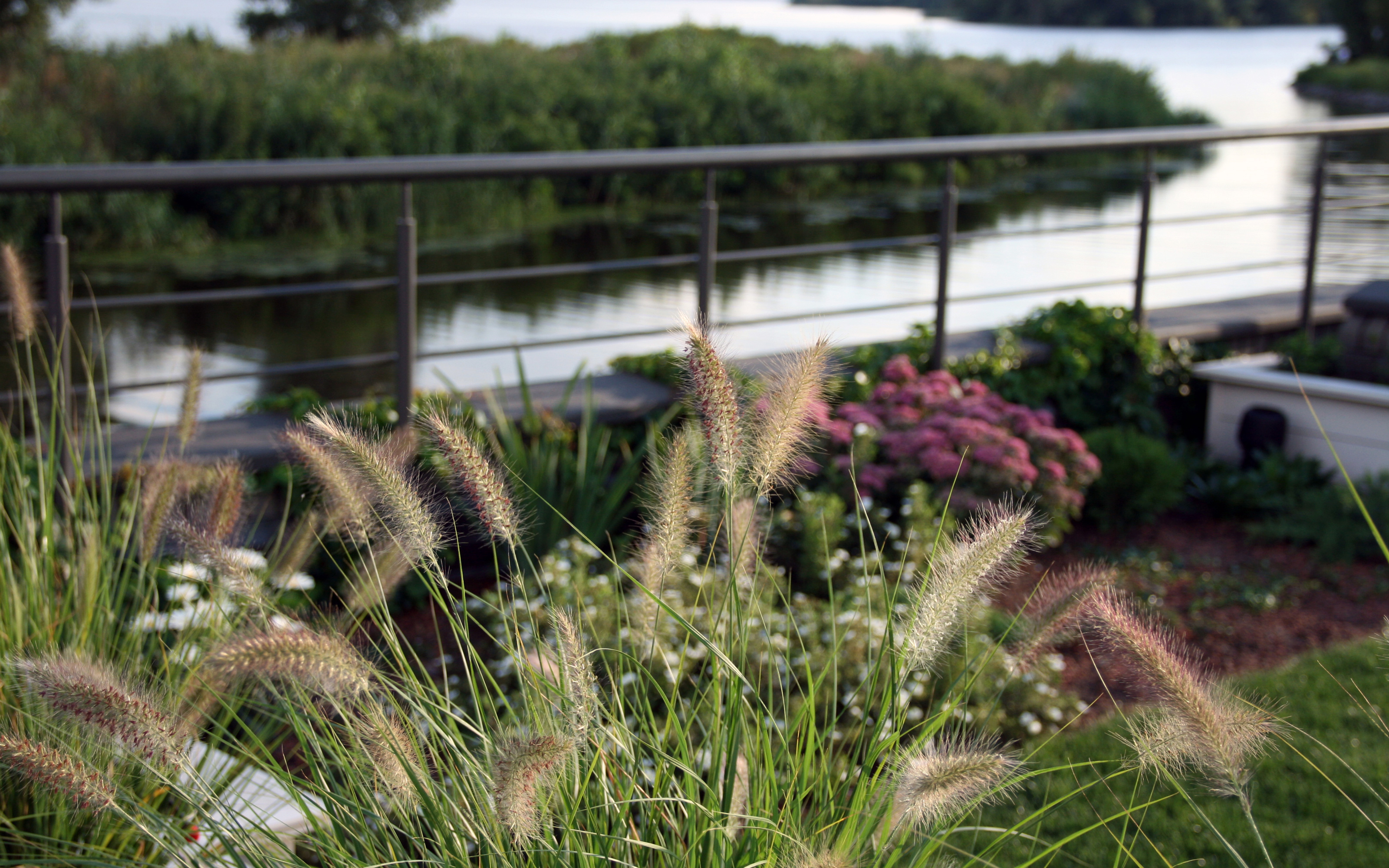 Green roof with lawn, shrubs and ornamental grasses