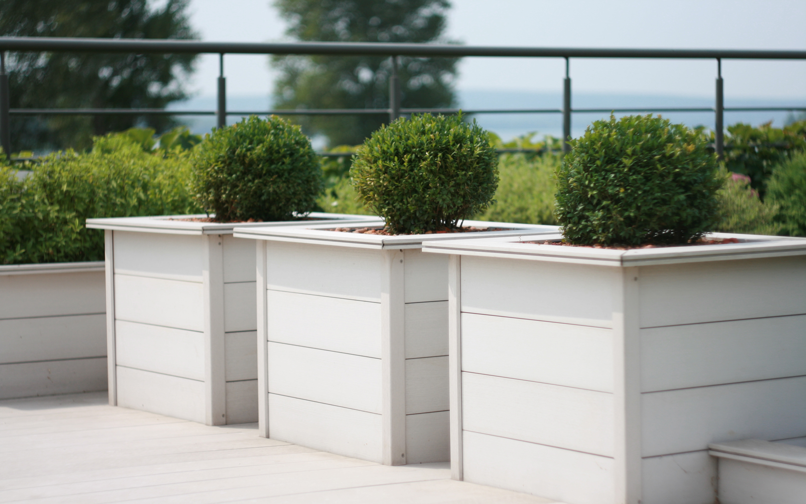 Box trees in wooden planters on a roof