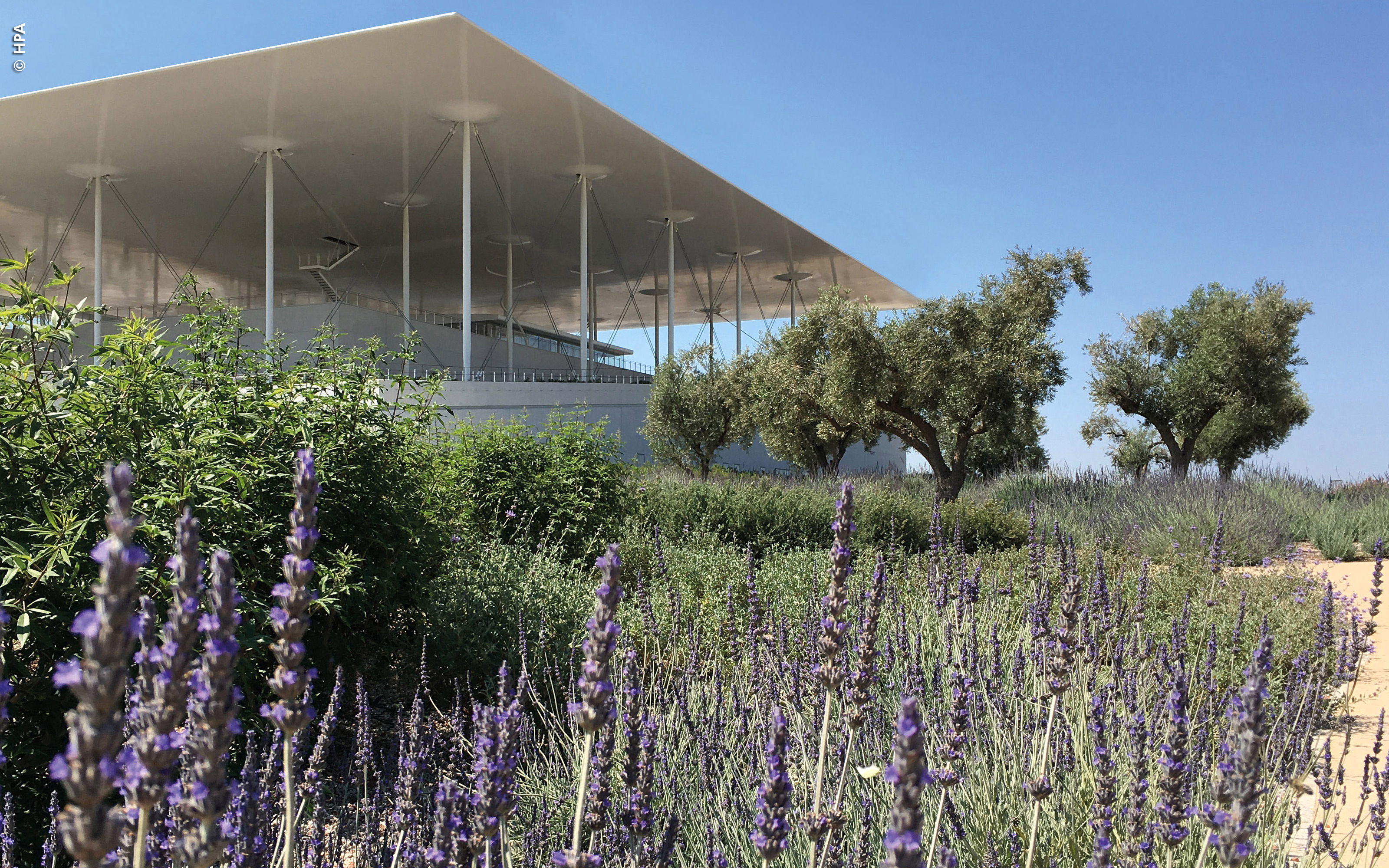 Roof garden with olive trees and lavender