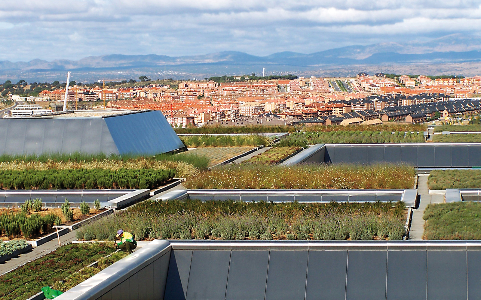 Large vegetated green roof