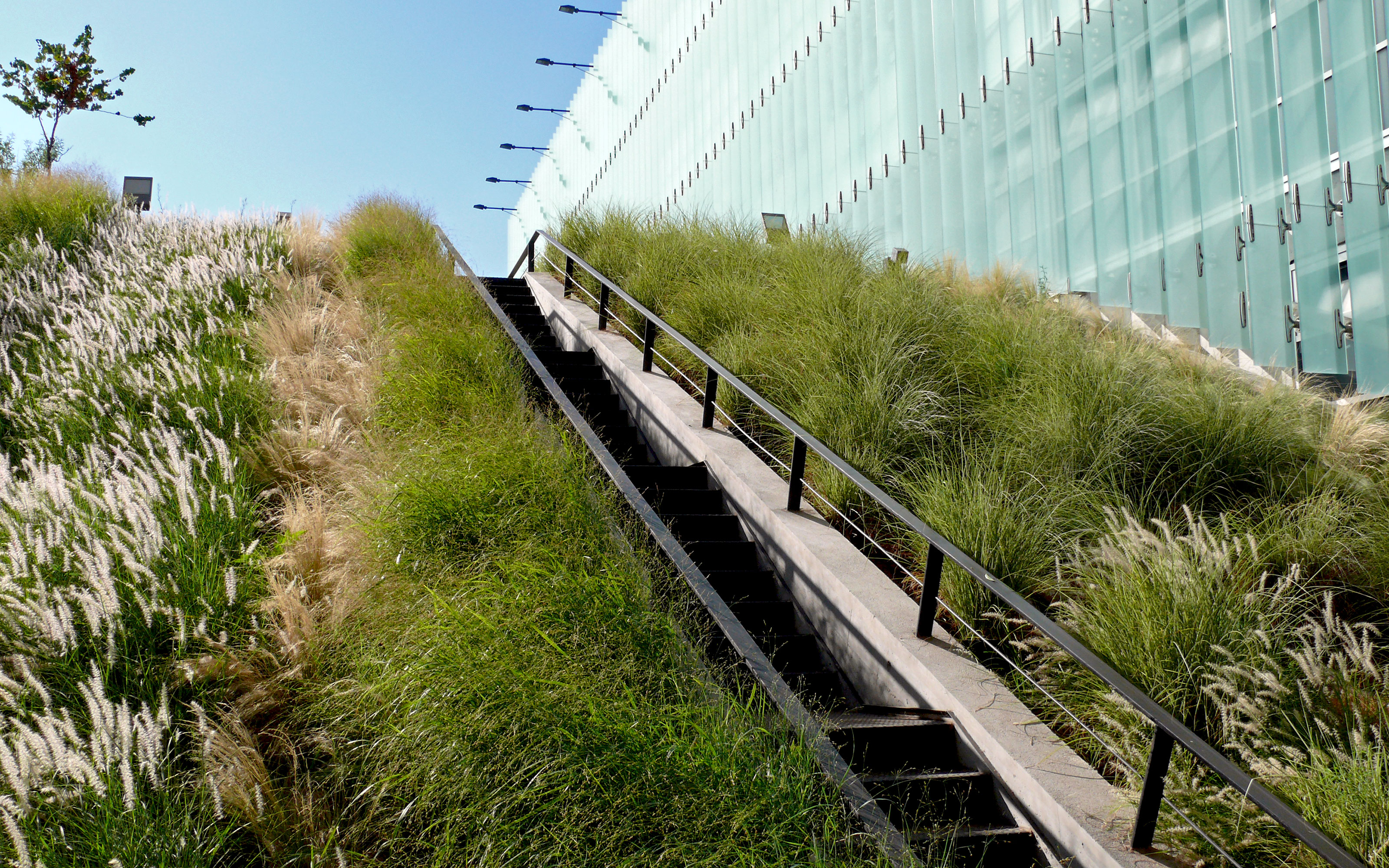 Pitched green roof with ornamental grasses and stairs up to the rooftop