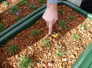 Experimentos com plantas de telhado verde