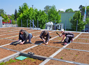 Research on individual layers of a green roof system build-up