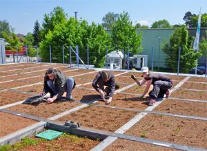 Pesquisa em camadas individuais de um sistema de cobertura verde