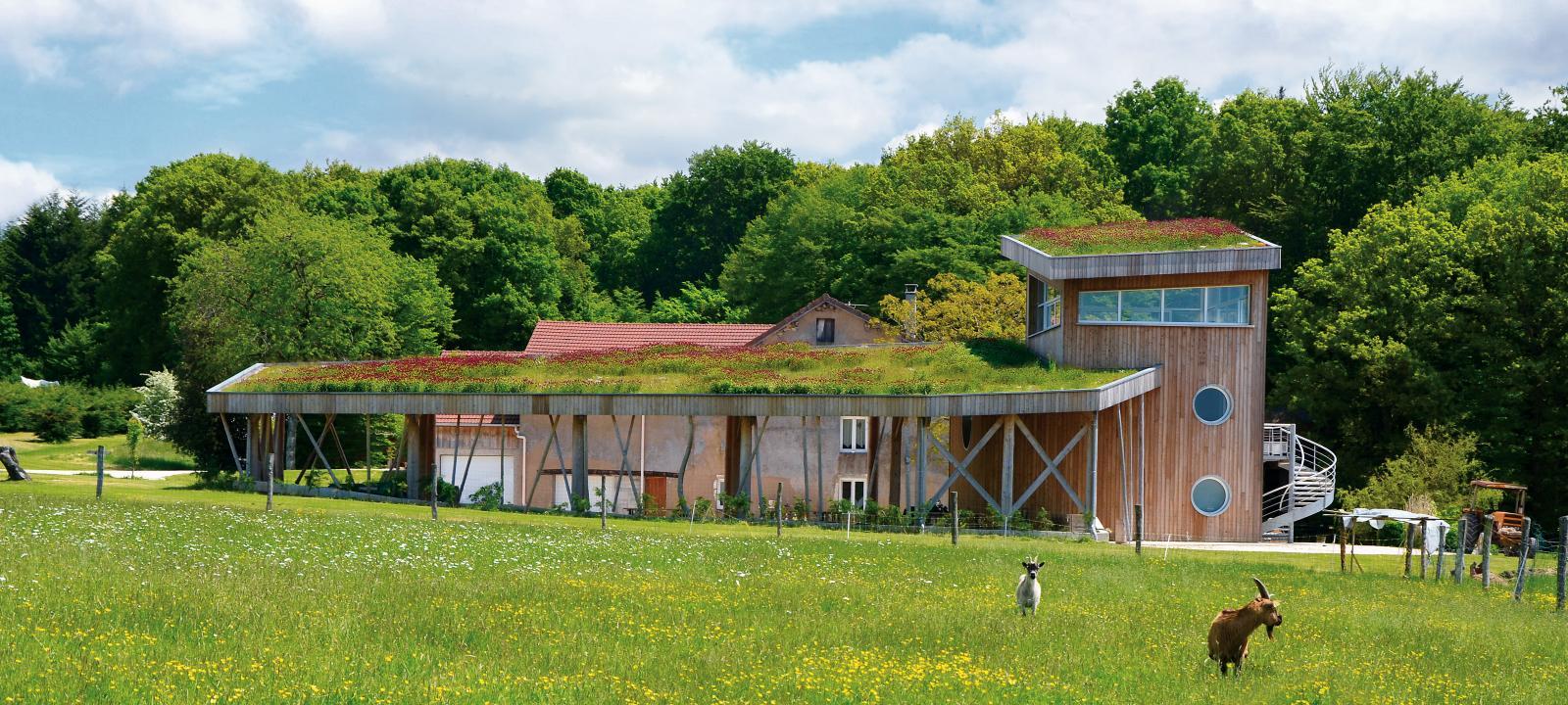 Extensive Green Roof Rockery Type Plants Zinco Green