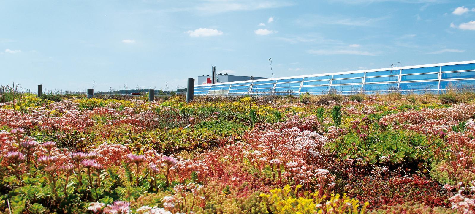 Extensive Green Roof Sedum Carpet Zinco Green Roof Systems