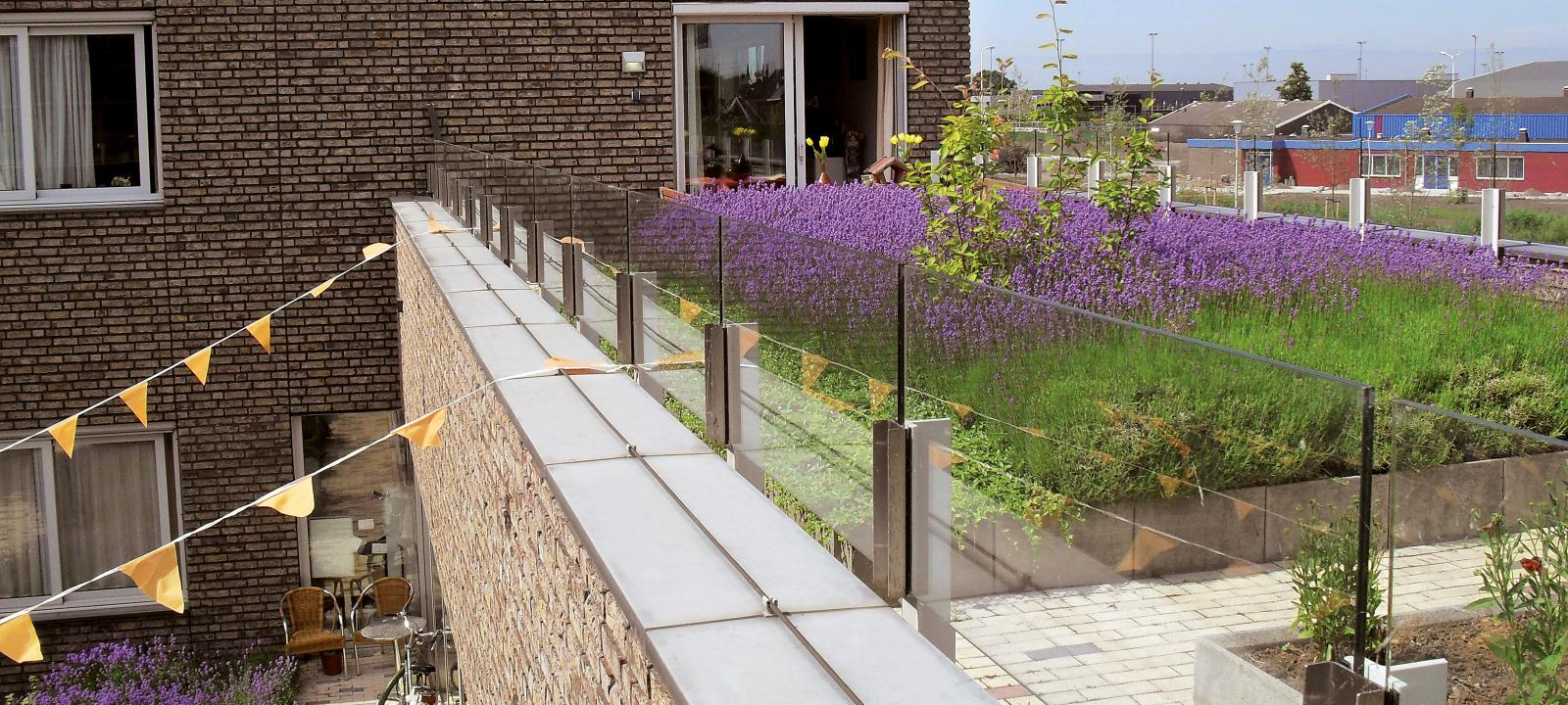 Intensive Green Roof Heather With Lavender Zinco Green