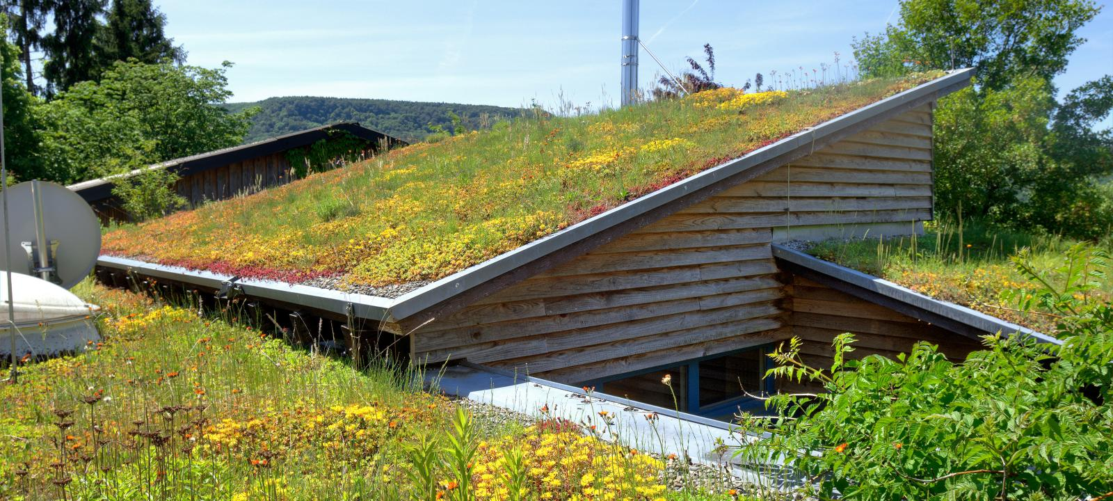 Pitched green roof