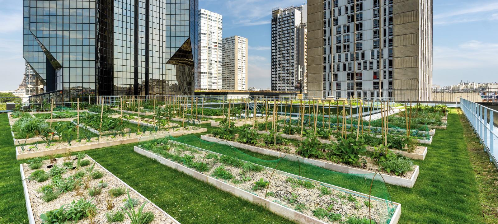 Urban Rooftop Farming Zinco Green Roof Systems