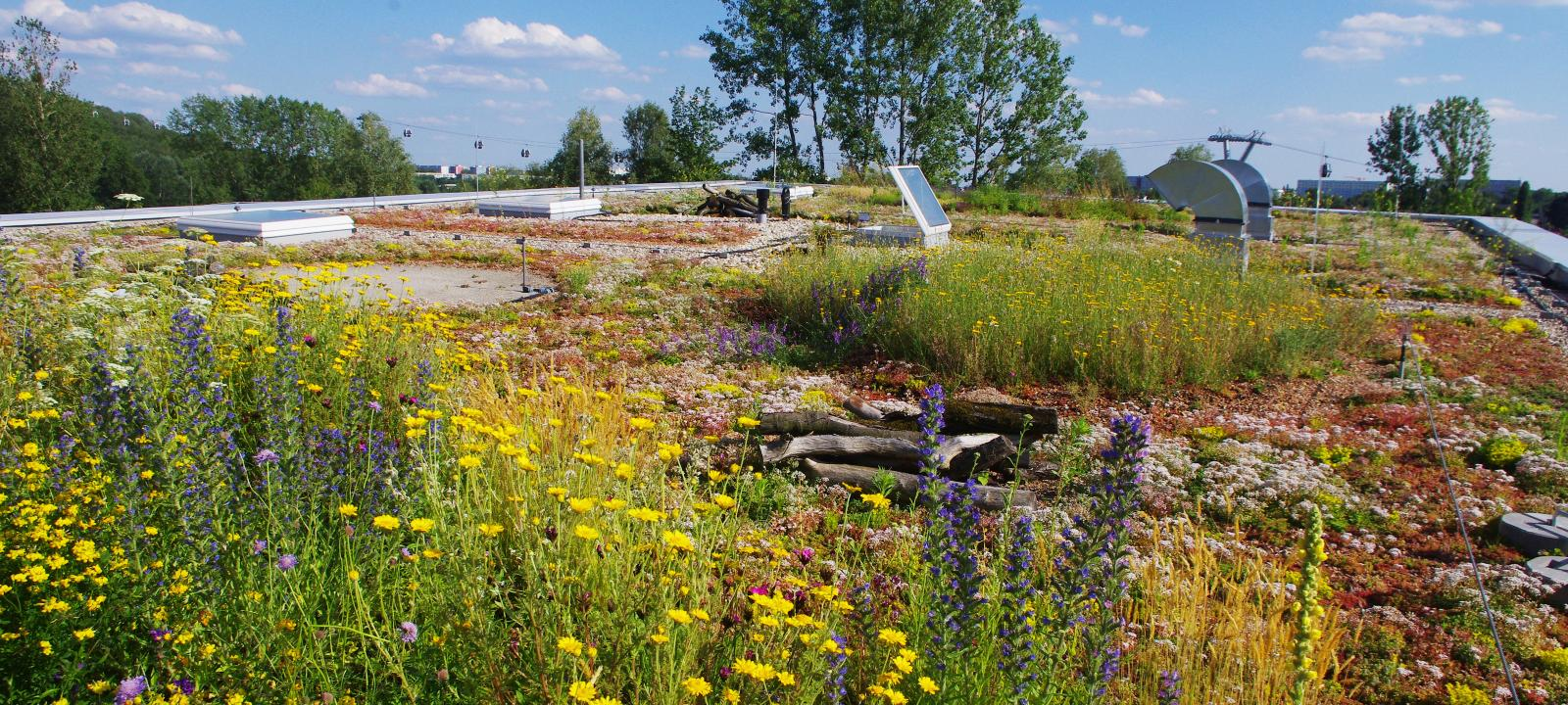 Biodiversity Green Roof Zinco Green Roof Systems