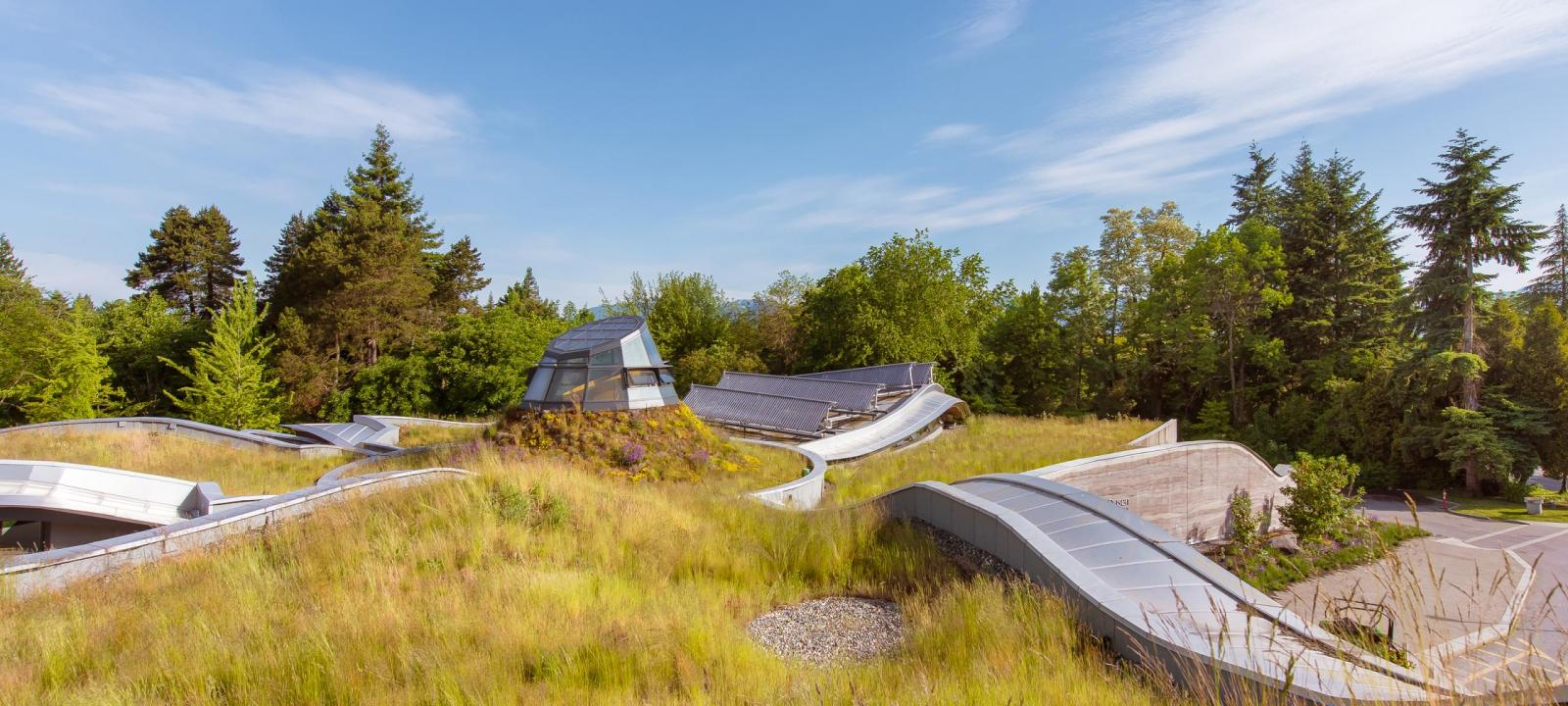 Undulating green roof with grasses