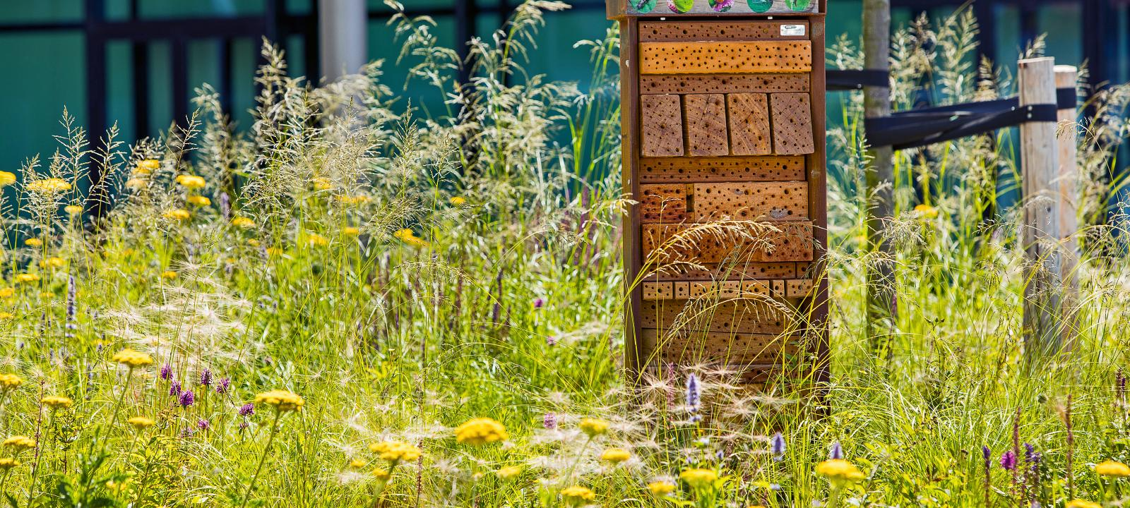 Meadow with nesting aid for insects.