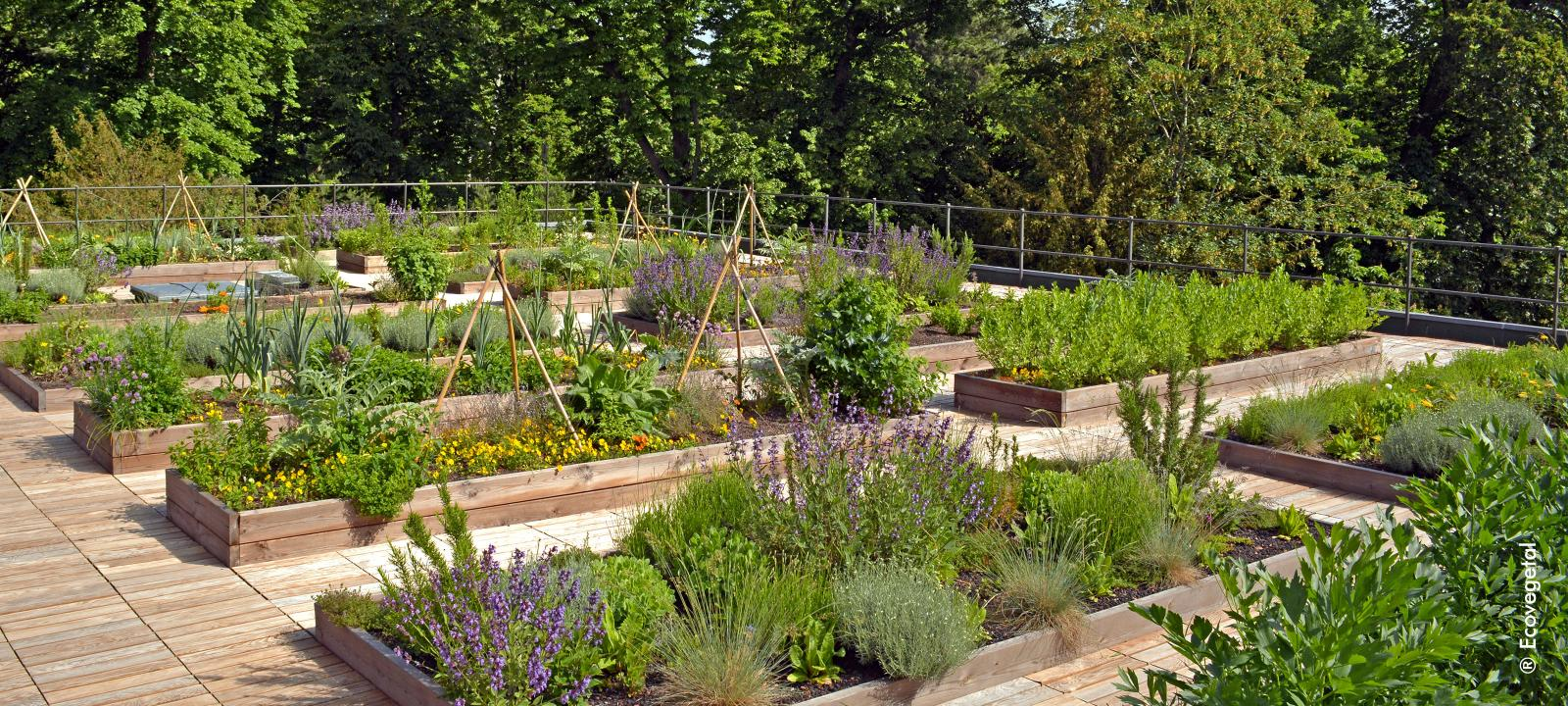 Plant beds with herbs and vegetables on a rooftop