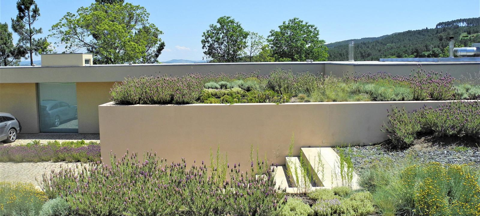 Lavender and herbs on a roof