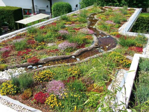 Green roof with water area