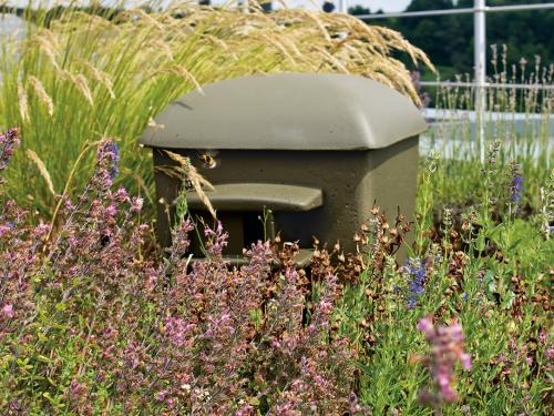 Green roof with herbs and Nesting aid