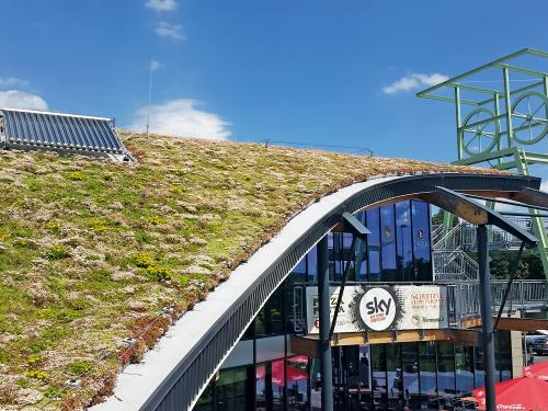 Pitched green roof in full bloom