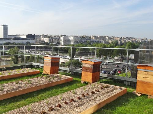 Bee hives and planting beds on a roof