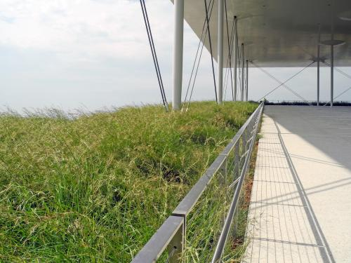 Terrace and green roof with grasses
