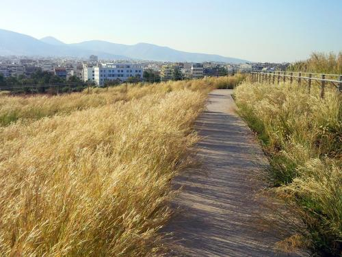 Pathway through grasses on a green roof