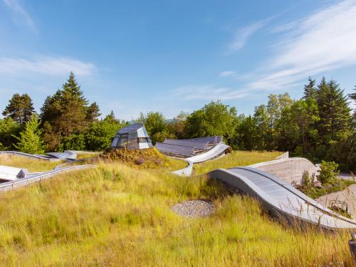 Green roof with grasses and atrium
