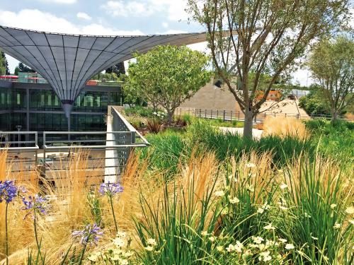 Roof garden with ornamental grasses and Lilies