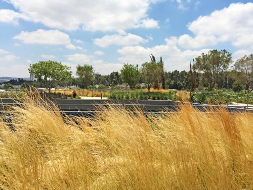 Ornamental grasses on a green roof