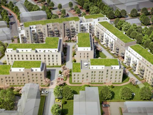 Bird's eye view of extensive green roofs on residential blocks