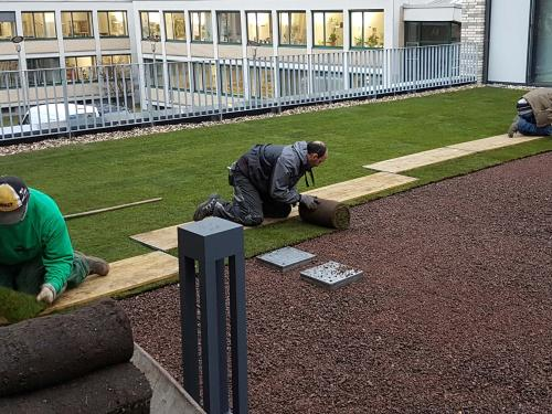Pre-cultivated rolls of turf are installed on a green roof