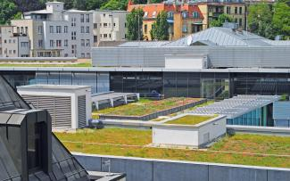 Extensive green roofs in the city