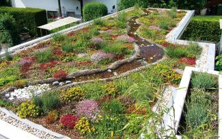 Biotope With Immense Biodiversity Biodiversity On A Roof