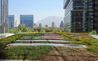 Extensive green roof amidst skyscrapers