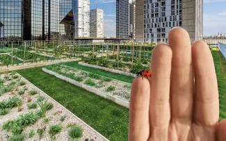 Hand with a ladybird in front of a roof garden
