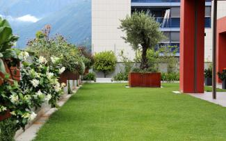 Roof garden with lawn, hanging flower boxes and an olive tree in a rust look planter