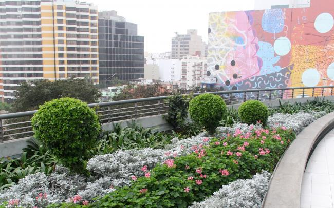 Roof garden with shrubs and small boxtrees in the city