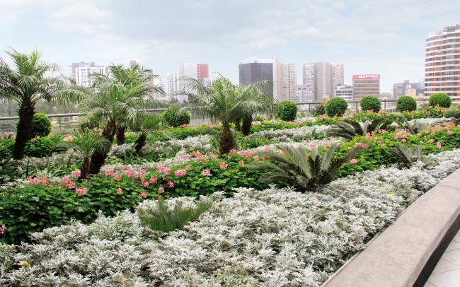 Roof garden with exotic plants