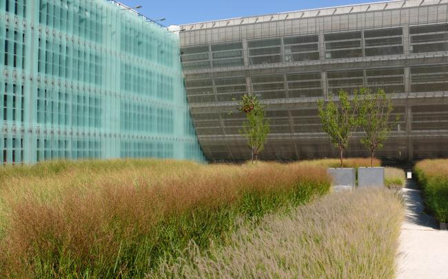 Modern roof garden with grasses