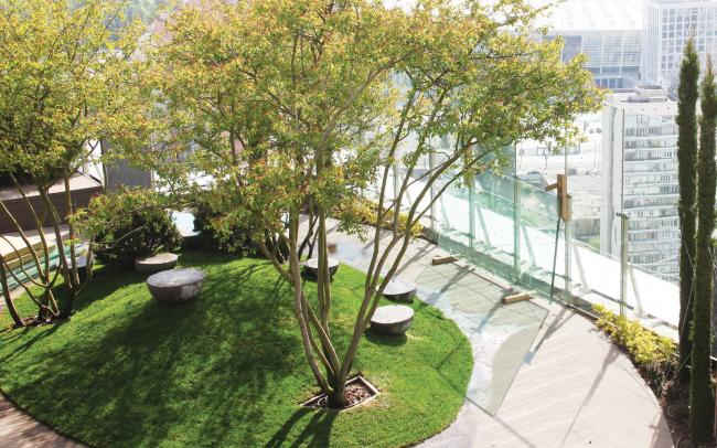 Roof garden with sitting area and big trees in a big city