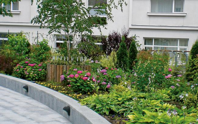 Plant beds with a small tree, shrubs and perennials
