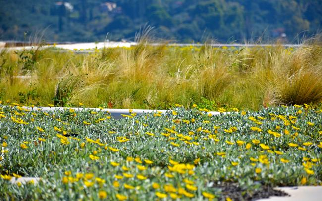 Swaying grasses and yellow flowering perennials