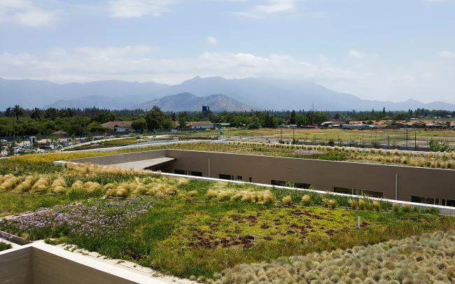 Large extensive green roof